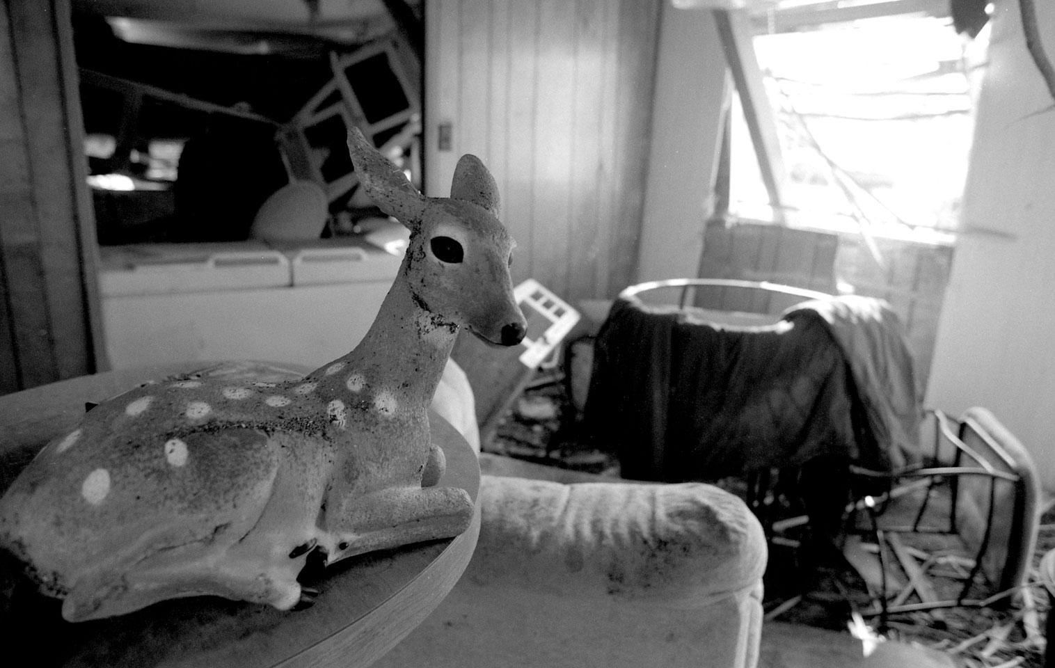 Deer In Trailer Home