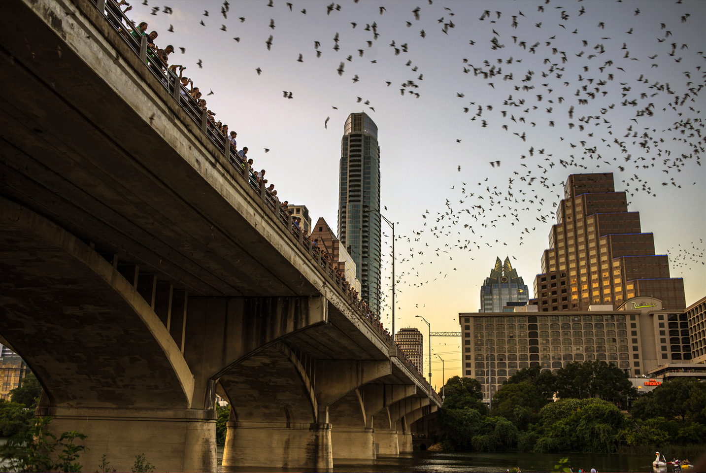 The Bat Bridge, Austin, TX